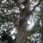tree_max