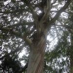 tree_min